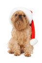 Free Dog Santa Royalty Free Stock Image - 26417116