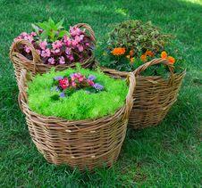 Free Beautiful Basket Of Flowers Stock Image - 26411201