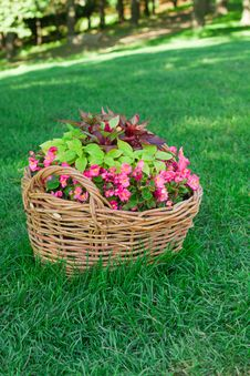 Beautiful Basket Of Flowers Royalty Free Stock Photography