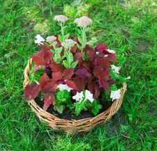 Free Beautiful Basket Of Flowers Royalty Free Stock Image - 26411596