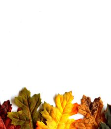 Free Colorful Autumn Leaves Isolated On A White Backgro Stock Images - 26414244