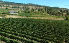 Free Vineyard In British Columbia Okanagan Stock Photo - 26416600