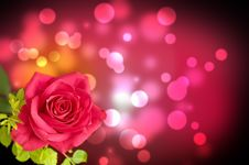 Free Flower, Red Rose Royalty Free Stock Image - 26416986