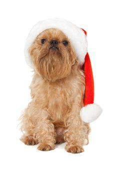 Free Dog Santa Royalty Free Stock Image - 26417116