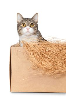 Cat In A Cardboard Box Royalty Free Stock Image