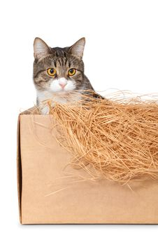 Free Cat In A Cardboard Box Royalty Free Stock Photos - 26417128