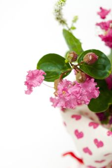 Free Bouquet Of Pink Crepe Myrtle Royalty Free Stock Photography - 26426187