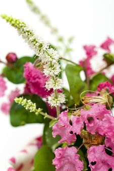 Free Bouquet Of Pink Crepe Myrtle Stock Images - 26426244