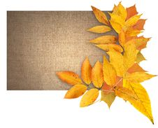Free Autumn Greeting Card Royalty Free Stock Photos - 26428638