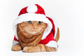 Free An Orange Cat In A Red And White Santa Outfit Stock Images - 26437144
