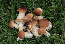 Free Porcini Mushrooms On The Grass Stock Photos - 26433573