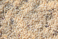 Free Dry Grains Of Corn Background Royalty Free Stock Photography - 26441807