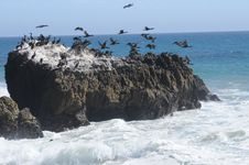 Free Seabirds In Flight Royalty Free Stock Images - 26440759
