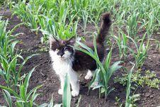 Free Wild Cat Royalty Free Stock Photos - 26442388