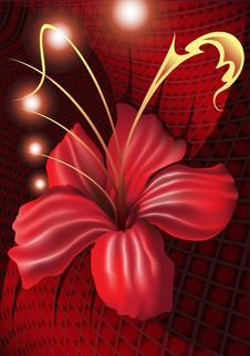 Free Red_orchid Royalty Free Stock Photography - 26446257
