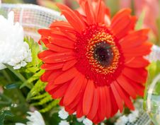 Free Red Flower Royalty Free Stock Image - 26446636