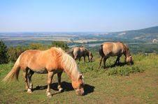 Free Three Horses Stock Image - 26447971