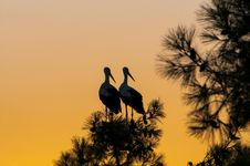 Free Waiting For Sunset, Two Stork Stock Photography - 26453412