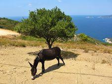 Free Donkey Stock Image - 26455011