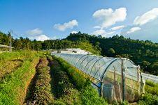 Free Farmland Royalty Free Stock Photography - 26456427