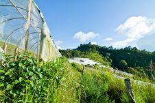 Free Farmland Stock Photography - 26456442
