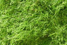 Free Slanted Grass Royalty Free Stock Photography - 26457057