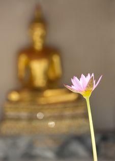 Free Sacred Lotus Royalty Free Stock Image - 26461296