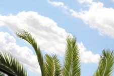 Free Green Leaf Of Palm Royalty Free Stock Photos - 26462778