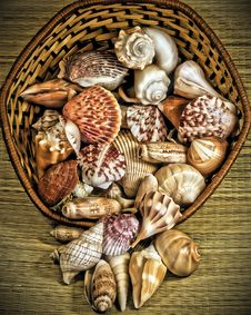 Free Basket Of Shells Stock Photo - 26465010