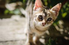 Small Kitten Outdoors Stock Image