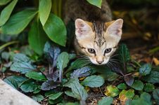 Free Small Kitten Outdoors Stock Photography - 26465612