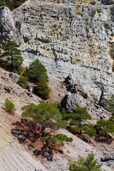 Free Pine-tree On The Rock Royalty Free Stock Photography - 26465647