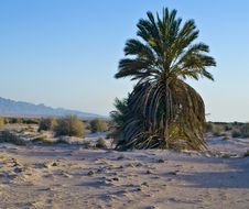 Free Avrona Nature Reserve Desert Of The Negev, Israel Royalty Free Stock Image - 26466646