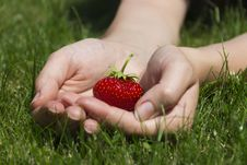 Free Appetizing Strawberry In Hands Royalty Free Stock Image - 26477766