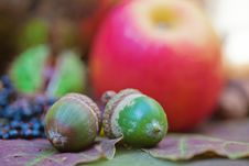 Free Acorns In Front Of Autumnal Fruits Stock Images - 26478744