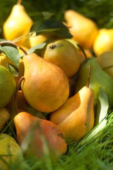 Free Fresh Pears On The Green Grass Royalty Free Stock Photography - 26479017