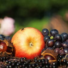 Free Apple Grapes And Others Royalty Free Stock Images - 26479049