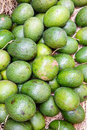 Free Avocado Stock Photography - 26482122