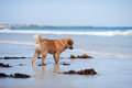 Free Elo Puppy Stands At The Seafront Royalty Free Stock Photo - 26486775