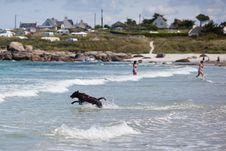 Free Labrador Dog Runs Through The Sea Water Stock Photography - 26481152
