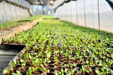 Free Little Plants In Green House Royalty Free Stock Photos - 26488238
