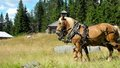 Free Horses Stock Photography - 26498282
