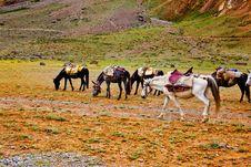 Free Packhorses Stock Photos - 26492013