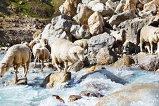 Free Sheep Group Royalty Free Stock Photos - 26492138