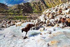 Free Sheep Flock Stock Photo - 26492140