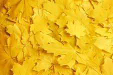 Free Autumn Leaves Stock Images - 26499244
