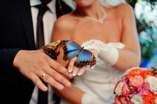 Free Beautiful Butterfly Royalty Free Stock Images - 26499299
