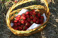 Free Strawberries In A Basket Stock Photo - 2651830