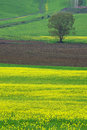 Free Landscape,Tuscany Val D Orcia Royalty Free Stock Image - 2654416
