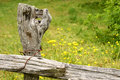 Free Old Fence Post Stock Image - 2655321